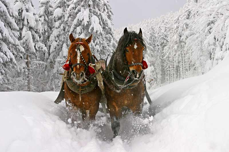 sleigh rides jackson hole activities
